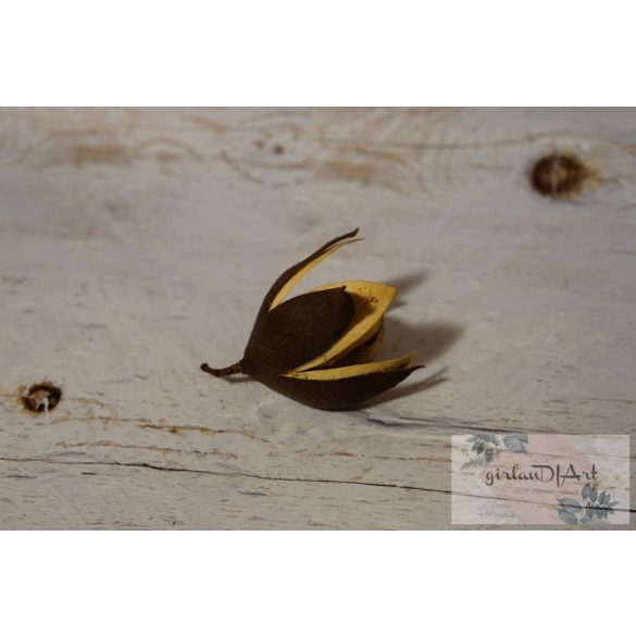 Wildlilie