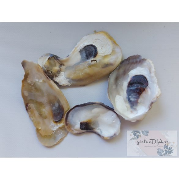 Kagylóhéj darabok